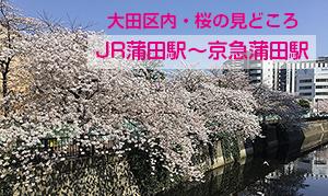 大田区内・桜の見どころ [JR蒲田駅〜京急蒲田駅]
