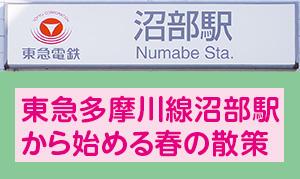 特集[春・商店会]沼部から桜坂を登り、多摩川駅を経由しながら、さくらと店をめぐる散歩へ