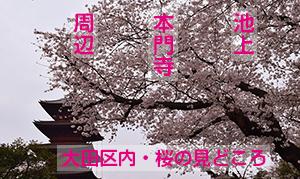 大田区内・桜の見どころ [池上本門寺周辺]
