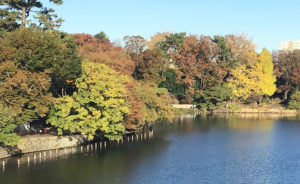 [四季の風景] 秋色に染まる洗足池