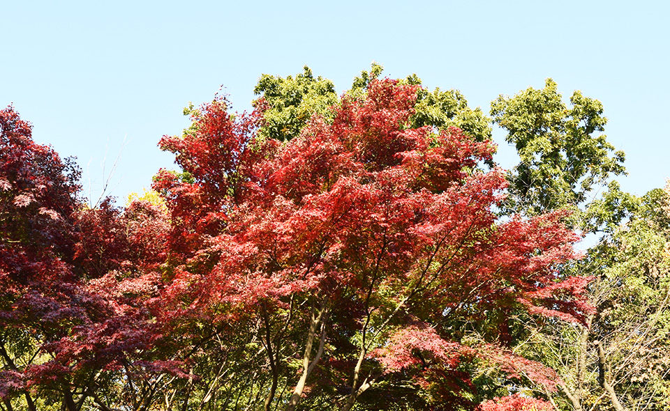 木々の葉が色づく季節 田園調布せせらぎ公園