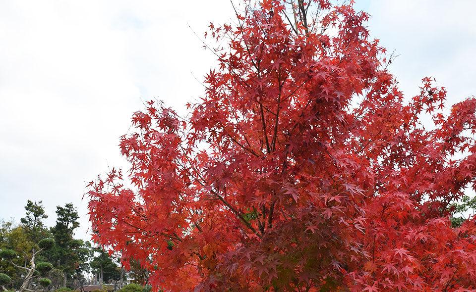 季節は晩秋から初冬へ 街・点描