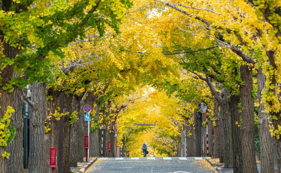 大河ドラマ『青天を衝く』日本資本主義の父・渋沢栄一ゆかりの地とは