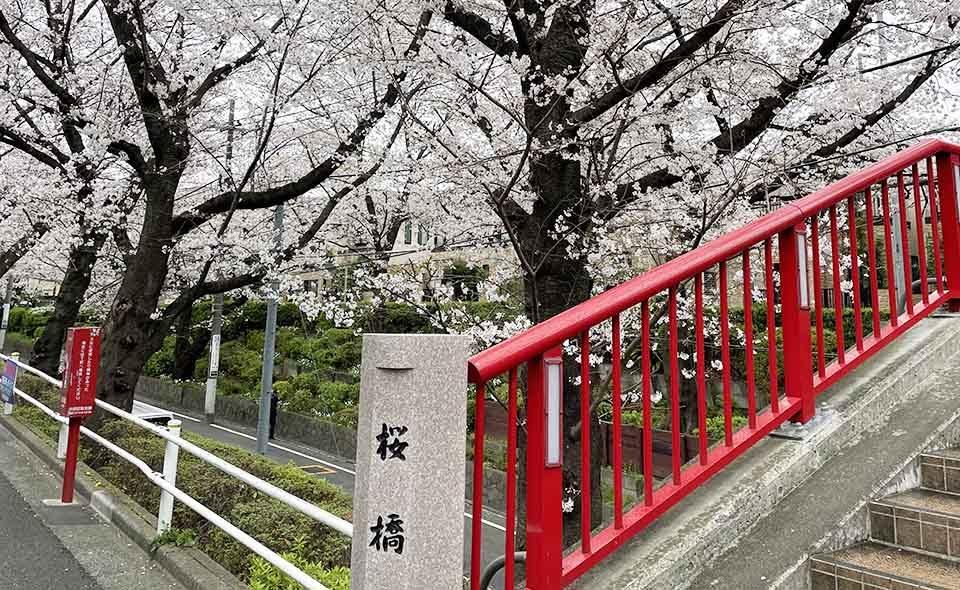 花曇りから春雨 令和3年3月25日の桜=桜 坂